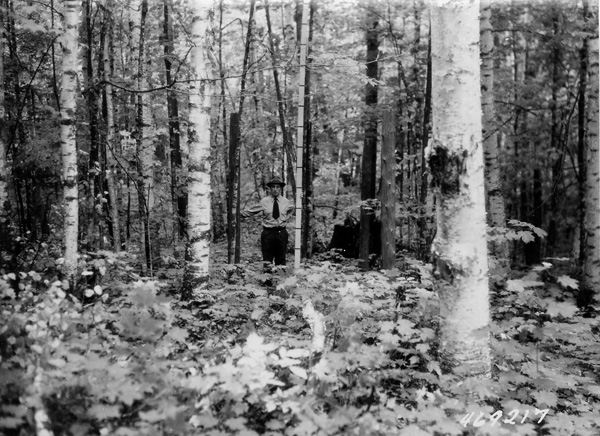 Photograph of Deer Enclosure on Eagle River District