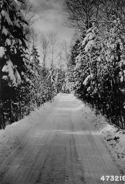 Photograph of Winter Scene Along Forest Highway on St. Ignace Ranger District