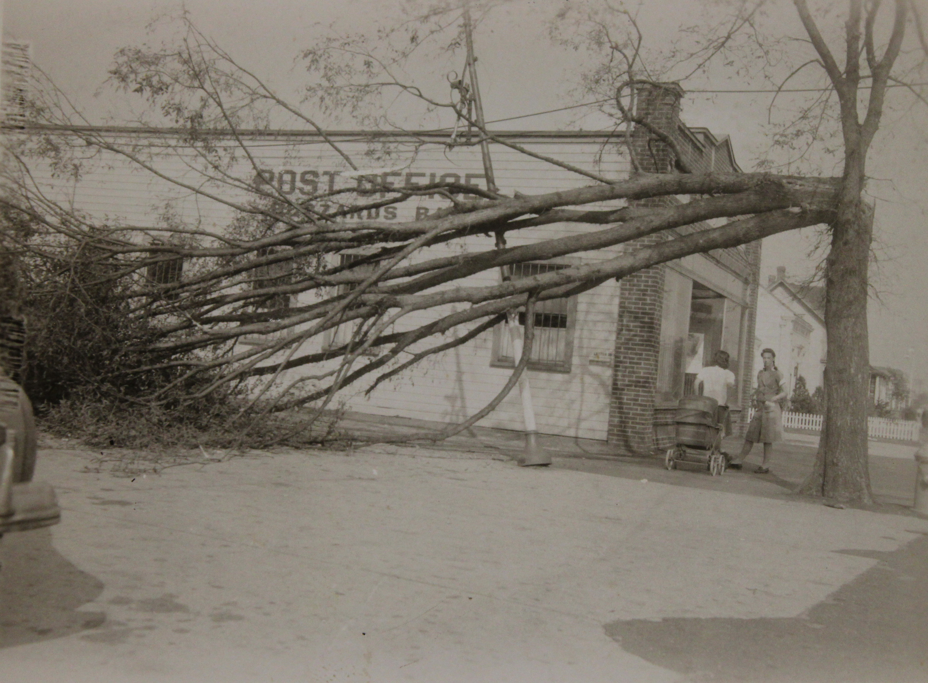 Hurricane-Damaged Tree and Utility Line outside Post Office, Buzzards Bay, Massachusetts