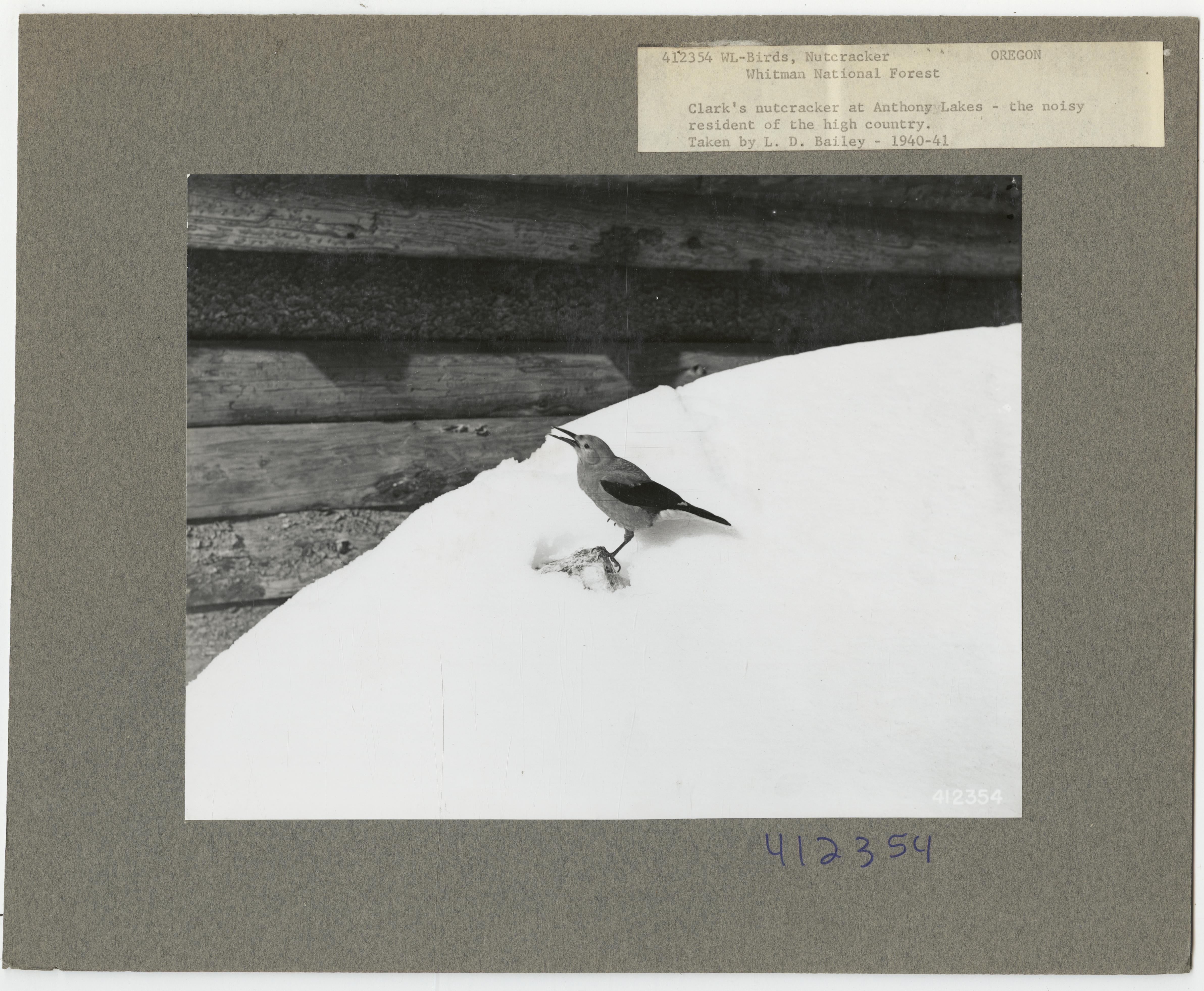 Birds - N